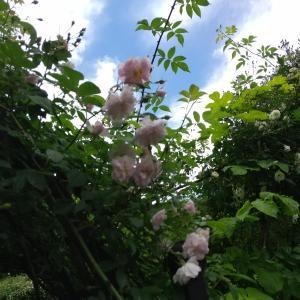 いちばん近い英国式庭園【バラクライングリッシュガーデン】に初めて行く