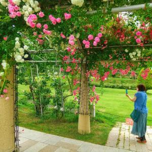 庭ができたのでバラの苗を山梨の【ロザヴェール】に買いに行く