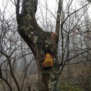 おもしろい樹木