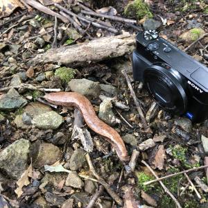 """【カメラ】SONY RX100 を修理に出したら新品交換になった話 """"電源を入れ直してください"""""""