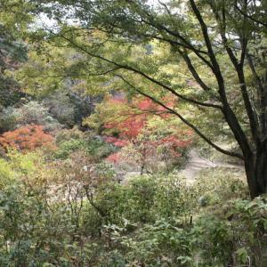 今日は木の日
