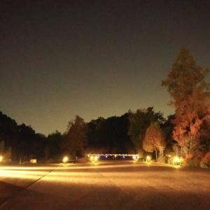 今日はOLの日 京都府立植物園夜のコスモス
