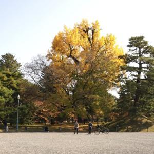 今日は組立家具の日 京都御苑 2