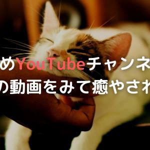 [おすすめYouTubeチャンネル紹介]どうしてもオナ禁を続けられない人はネコの動画をみて癒やされよう