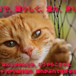 猫の生き方に学ぶ!みんな必死で生きている「なのだソング」