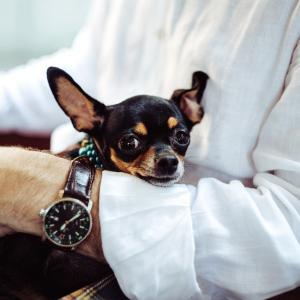 ペットと暮らす高齢一人暮らしの不安!ペットのために遺言書を残そう