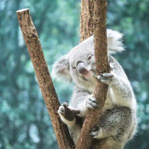 【平川動物公園】はコアラがたくさん飼われている鹿児島市の動物園です