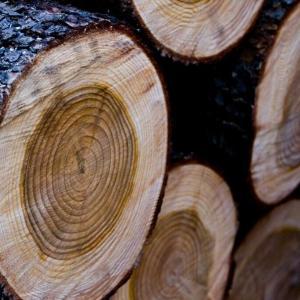 【木材の知識】板目と柾目の違いについて