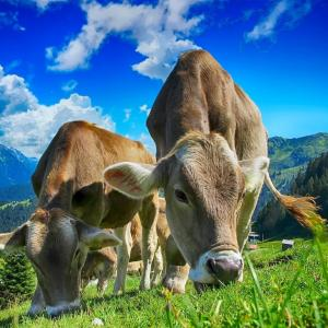 松屋のおまけミニ牛