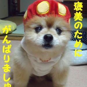 「お注射実践編」の巻('◇')ゞやってやろぉーーじゃないっ!③