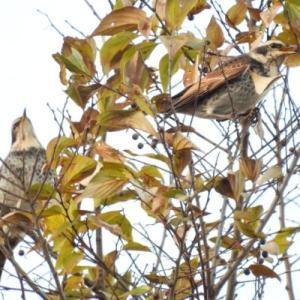 ご近所探鳥 ごはん探しに忙しい鳥たち 続き
