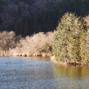長者ヶ岳から田貫湖一周 続きの続き