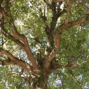 木の実コレクション #8