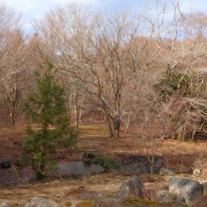 箱根でおかわり探鳥
