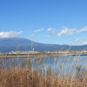 富士川河口で絶景鳥見