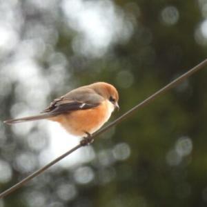 ショート探鳥 冬空の下の野鳥たち