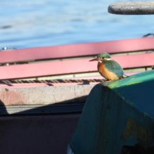 MTBで山中湖ぐるり探鳥 #3