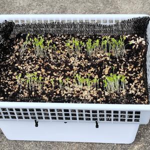サラダボックス用アミカゴ水耕栽培装置を作ってみました
