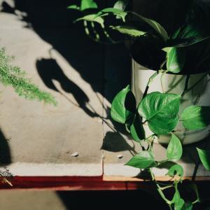 完全室内の太陽光無しでも枯れないで観葉植物は育つのか!?