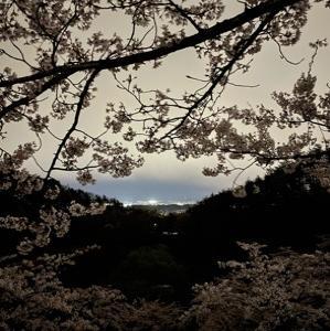 桜は満開🌸