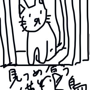 猫の毎日のルーティン