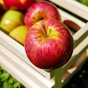 りんごとゆで卵ダイエット二十四日目