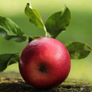 りんごとゆで卵ダイエット三十三日目