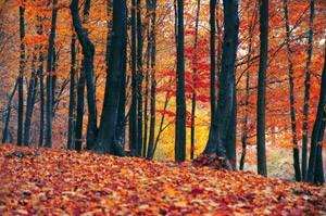 【不安解消】初めての秋キャンプ