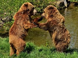 【キャンプの不安要素】熊に会わない対策をしましょう