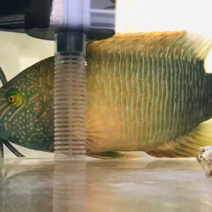 シャイな魚