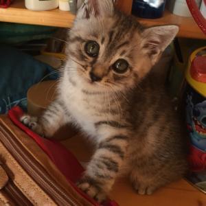 そして2015年。またもや保護した子猫をファミリーにした話!