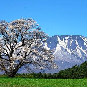 小岩井農場一本桜から八幡平の雪の回廊を楽しむ岩手山周遊