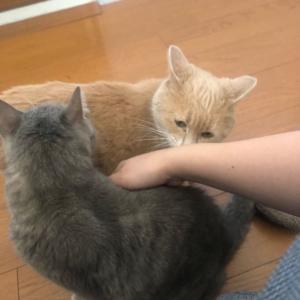 猫ちゃんのお見送り🐈