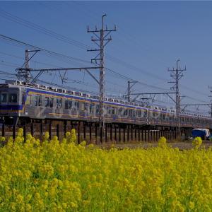 萩原天神駅~北野田駅間の菜の花畑で撮影しました(2021年2月24日)