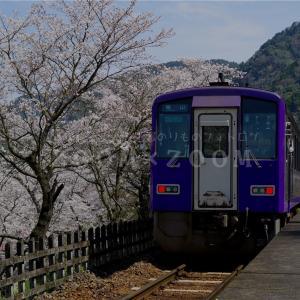 近郊区間大回り乗車で関西本線笠置駅の桜を撮影(2021年3月27日)
