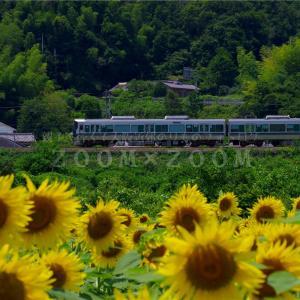 五條市上野公園のひまわり畑からJR和歌山線227系を撮影(2021年7月31日)