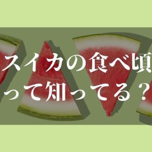 スイカの食べ頃っていつ!?【意外に知らない食べ頃の時期と保存方法とは】