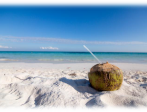 驚異的なココナッツオイルの話