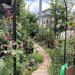 8月上旬の庭。