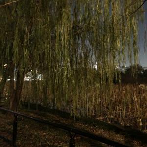 【女一人旅】東京あちこち・上野恩賜公園(東京都台東区を歩こう)不忍池の怖い話 ⑴入水した柳の前、恋人・感応丸の後を追って~愛し合う二人の悲恋~(室町時代)