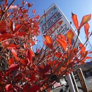 ロードロライド 丹沢湖に紅葉を見に行くっていつもとノリが違うんですが? 新しいプレイ篇