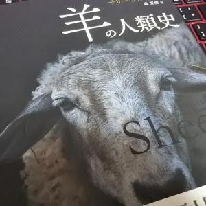 羊あれこれ