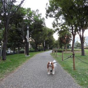 中之島公園あさんぽ