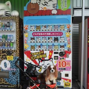 大阪新名所10円自販機