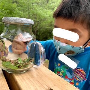 手賀の丘探検隊に入隊!虫やカエルと触れ合い、子どもと自然体験しよう