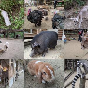 黒ブタの襲来!山の上のふれあいMAXな動物園『渋川動物公園』(玉野市)