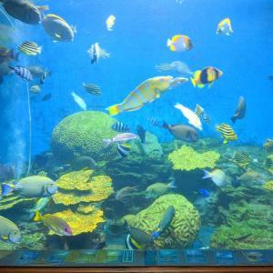 ビーチに建つ昔ながらのミニ水族館『渋川マリン水族館』(玉野市)