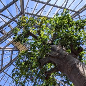 バオバブに会えるワールドプラントツアー『世界を旅する植物館』(宇部市)