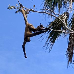 走る!叫ぶ!飛ぶ!アクティブなサルがたくさん『ときわ動物園』(宇部市)