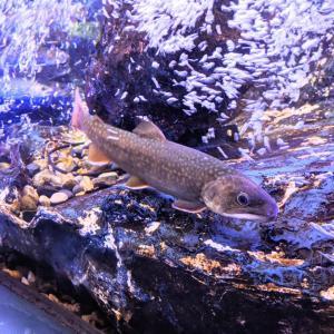 幻想的なナイトアクアリウムと幻の魚ゴギ『マリホ水族館』(広島市)
